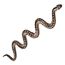 Уничтожение змей